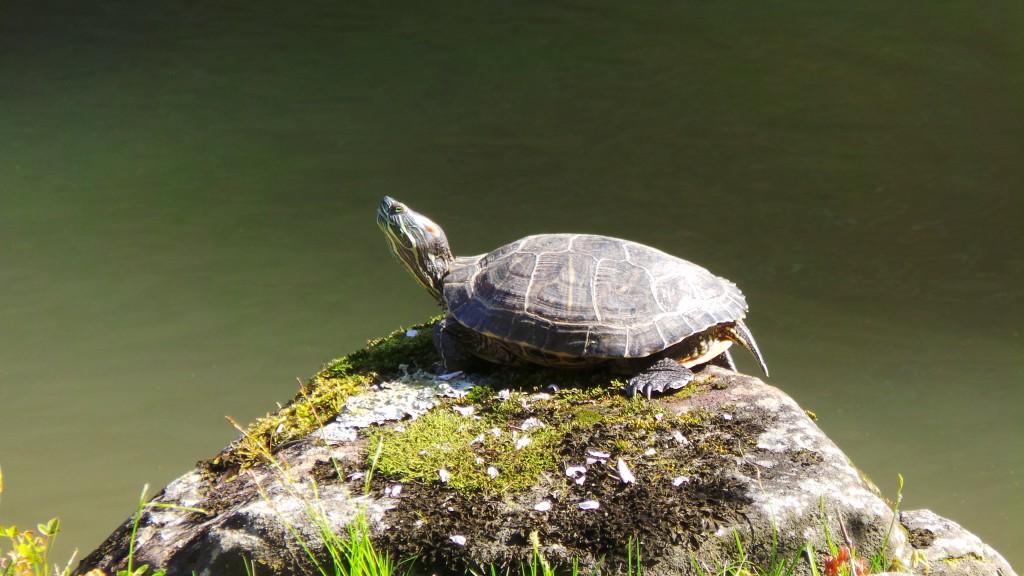 Turtle loving sunshine