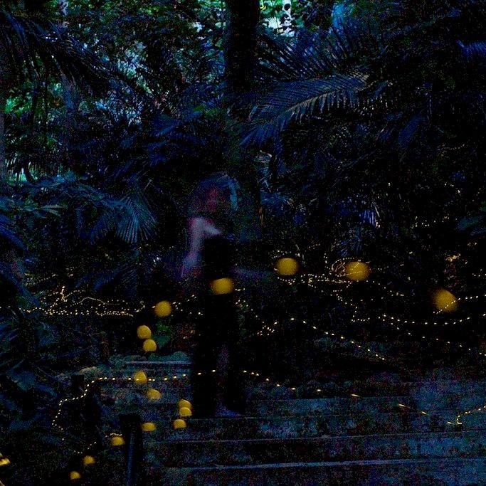 Fireflies in Ishigaki