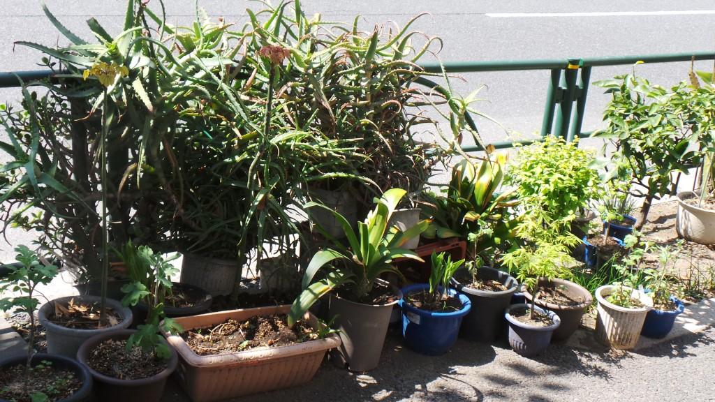 Tiny garden in Tokyo