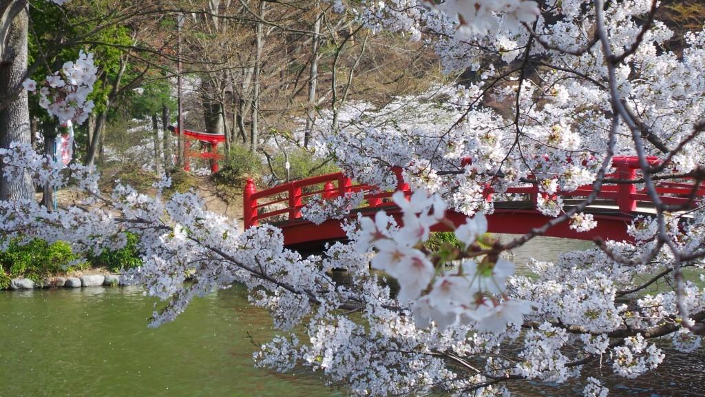Cherry blossom Suzaka garden
