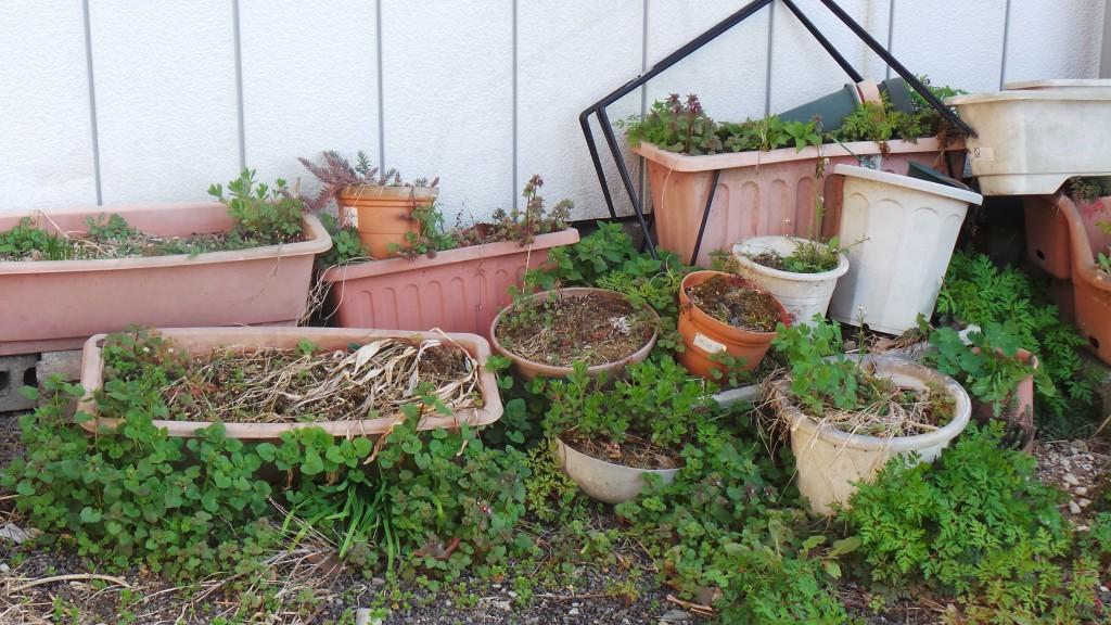 Forgotten garden in Suzaka
