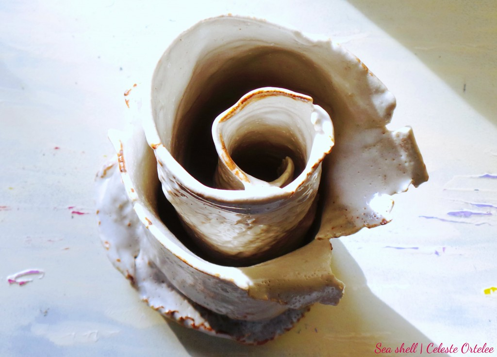 Sea shell inside