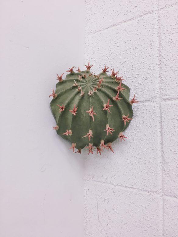 qusamura hiroshima japan cactus ceramics keramiek japan