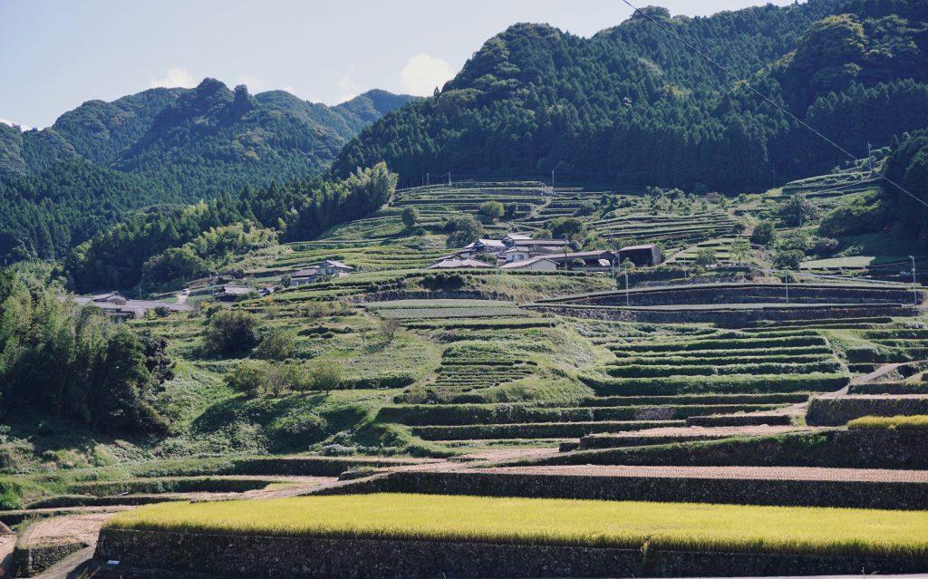 rijstvelden theeplantages ureshino kyushu japan nagasaki