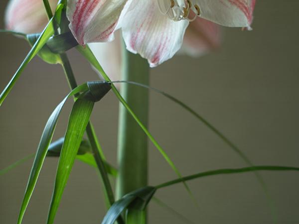 ikebana reizen japan